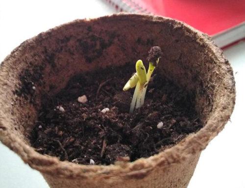 Plantando intenciones